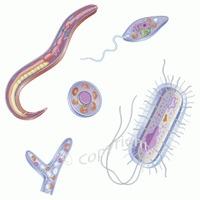 Afectiuni digestive parazitare
