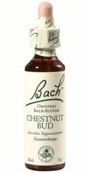 Chestnut Bud - Bach