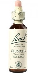 Clematis - Bach
