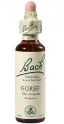 Gorse - Bach