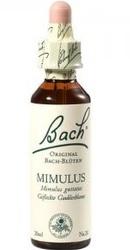 Mimulus - Bach