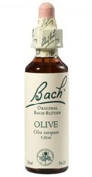 Olive - Bach