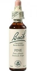 Pine - Bach