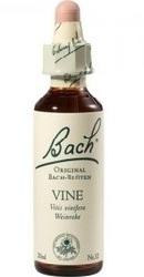 Vine - Bach