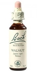 Walnut - Bach
