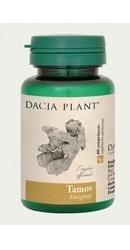 Tamov - Dacia Plant