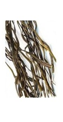 Alge Sea Spaghetti - Evertrust