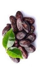 Cacao Boabe Organice Crude - Evertrust