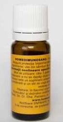 Homeoimunosang - Homeogenezis