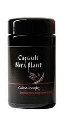 Calmo Complex - Nera Plant