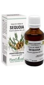 Extract din mladite de sequoia