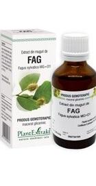 Extract din muguri de fag