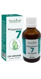 Polygemma 7 - Cai urinare - PlantExtrakt