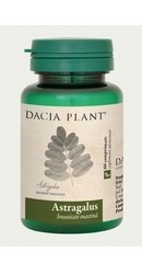 Astragalus - Dacia Plant