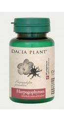 Harpagophytum - Dacia Plant