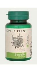 Boswellia - Dacia Plant