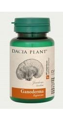 Ganoderma - Dacia Plant