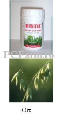 Suc de Orz Verde - Biovital
