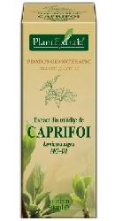 Extract din mladite de CAPRIFOI NEGRU – PlantExtrakt