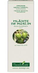 Concentrat din mladite de maslin  - Plantextrakt