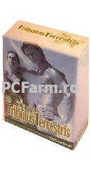 Tribulus terestris
